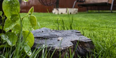 Why Tree Stump Removal Is Essential, Ewa, Hawaii