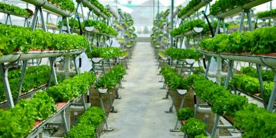 Why Vertical Farming Is the Future of Food , Genoa, Michigan