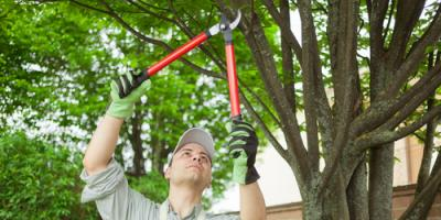 3 Big Benefits of Regular Tree Service, Newburgh, New York