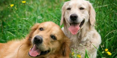 3 Tips to Help You Acquaint Your Old Dog With a New One, O'Fallon, Missouri