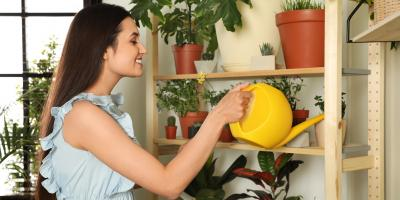 How to Choose Plants to Grow Year-Round in Your Sun Room, Nicholasville, Kentucky