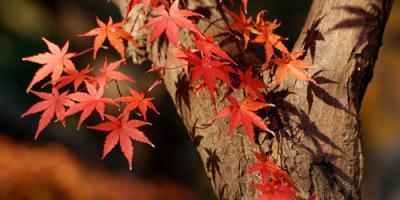 4 Common Trees Found Throughout America, Abbotts Creek, North Carolina