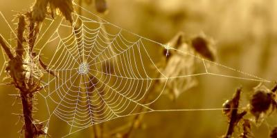 3 Household Spiders Encountered by Exterminators, Rochester, New York