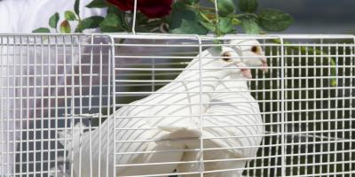 3 Interesting Facts About White Doves, Covington, Kentucky