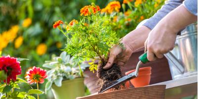 3 Lawn & Garden Tips for the Summer Months, Foristell, Missouri