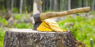 4 Reasons to Remove Tree Stumps, San Antonio Central, Texas