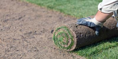 4 FAQ About New Lawn Sod & Grubs, Hill, Arkansas