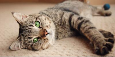Why You Need Professional Odor Removal for Pet Stains, Columbia, Missouri