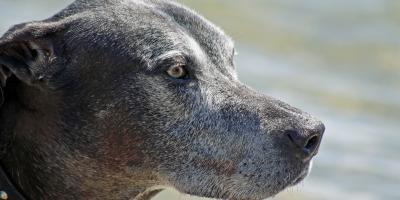 4 Signs Your Dog Is Aging, High Point, North Carolina