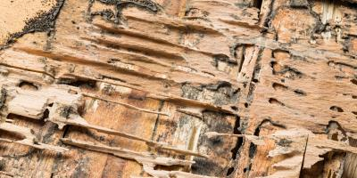 Your Guide to Termite Treatment & Preparation, Newport, Ohio