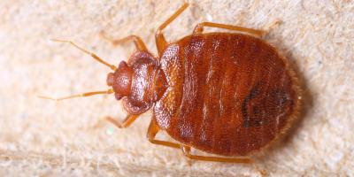 Pest Control Company Answers Bed Bug FAQs, North Haven, Connecticut