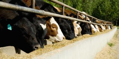 How Livestock Supply's Pricing Impacts Meat Production, Bethel, Ohio