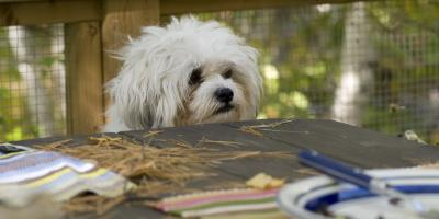 3 People Foods That Are Safe for Your Dogs: A Veterinary Professional Explains, Cabot, Arkansas