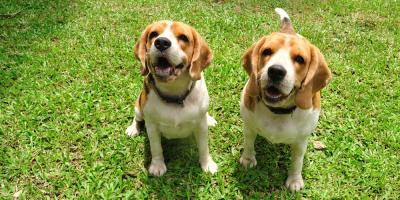 3 Dog Boarding Tips for First-Timers, Newport-Fort Thomas, Kentucky