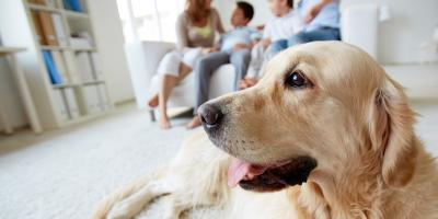 3 Ways to Keep Pet Hair Out of Your Washer & Dryer, Delhi, Ohio
