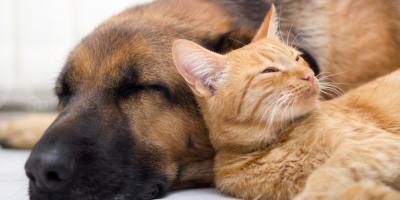 5 Signs You Should Visit a Pet Dermatologist, Sharonville, Ohio
