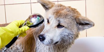 3 Ways to Get Your Dog to Love Water, McKinney, Texas