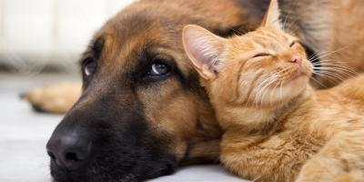 3 Common Pests That Can Harm Your Pets, Bolivar, Missouri