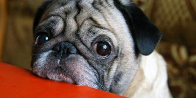 How Can I Remove Pet Urine from My Carpet?, Barnesville, Ohio