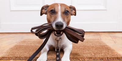 4 Major Benefits of Hiring Dog Walking Services, Sunrise, Florida