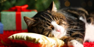 5 Ways to Deter Cats From Playing With Christmas Trees, Ewa, Hawaii
