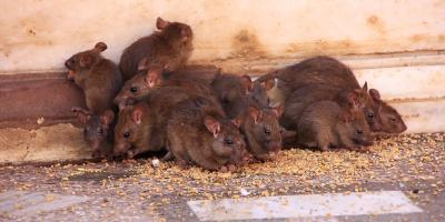 A Pest Control Company's Top Infestation Prevention Tips, North Buck Shoals, North Carolina