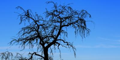 What to Do When You Need Dead Tree Removal, York, South Carolina