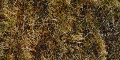 3 Landscaper Tips for Dealing With Dormant Grass, Brookfield, Connecticut