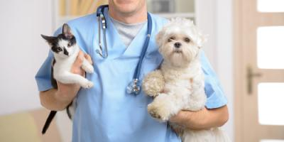 3 Reasons Veterinarians Encourage Spaying, Prairie du Chien, Wisconsin