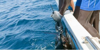 3 Fish You May See During Spring Sport Fishing in Honolulu, Honolulu, Hawaii
