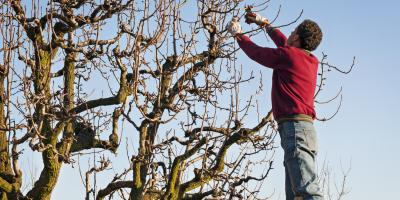 3 Signs Your Tree Needs Care, Newburgh, New York