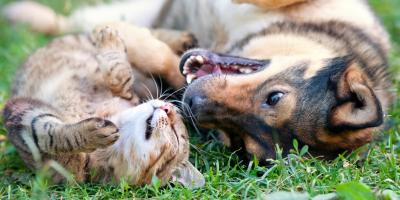 Milford Veterinarian Shares Signs & Treatments of Pet Skin Disorders, Milford, Ohio