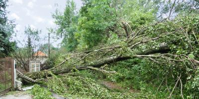 How to Take Care of Trees During Storm Damage Cleanup, West Hartford, Connecticut