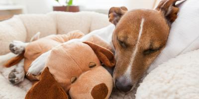 Dog Grooming Center Lists 3 Signs Your Pet Isn't Feeling Well, Newport-Fort Thomas, Kentucky