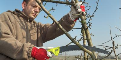 A Tree Care Supplies Company Answers Common Pruning Questions, Stamford, Connecticut