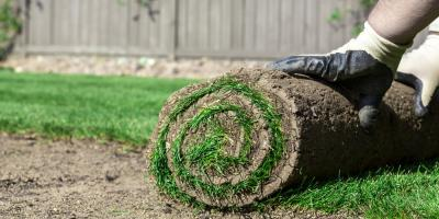What You Need to Know About Sod, Scott, Arkansas