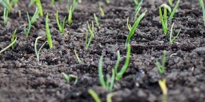 Topsoil Is the Root of Success for Great Gardening, Anchorage, Alaska