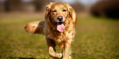 Why Dog Houses & Cots Are Recommended for Pet Owners, Ewa, Hawaii