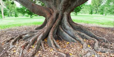 How Do Tree Roots Affect Drains?, Norwalk, Connecticut