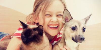 Local Veterinarian Shares 3 Tips for Caring for Puppies & Kittens, Honolulu, Hawaii