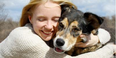 Pet Care Experts on the Benefits of Dog Treadmill Training, Milford city, Connecticut