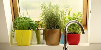 How to Grow an Indoor Herb Garden, Anchorage, Alaska