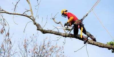 Why Hire an Arborist During Winter?, Cincinnati, Ohio
