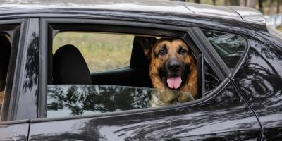3 Tips on Long-Distance Moving With Pets, Lexington-Fayette Central, Kentucky