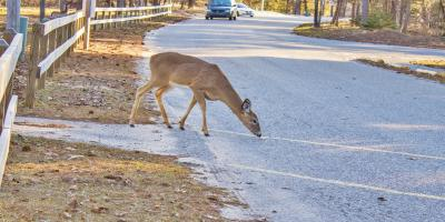 3 Steps to Take After a Collision With a Deer , Truesdale, Missouri
