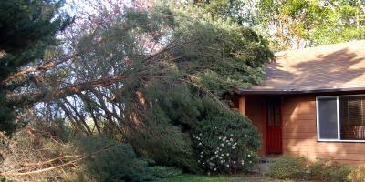 Can an Arborist Save My Leaning Tree?, Midland City, Alabama
