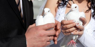 How to Plan a White Dove Release, Covington, Kentucky