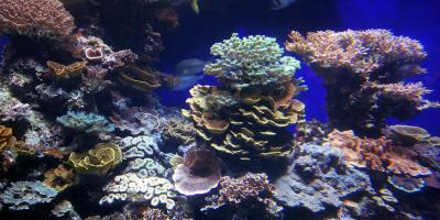 What Invertebrates Can You See in Hawaii's Coral Reefs?, Honolulu, Hawaii