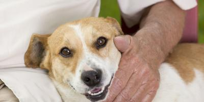 4 Reasons to Adopt a Senior Dog, Springfield, Ohio
