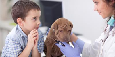 Veterinarian Answers FAQ About Pet Surgery , Harrogate, Tennessee